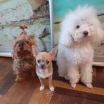 Выгул/Передержка собак любых пород в квартирных условиях