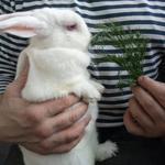 Передержка кроликов, крыс, хомячков, шиншилл и др.грызунов