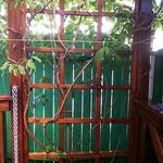Садовые решётки для плетущихся растений