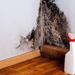 Уничтожу грибок, плесень, санитарная обработка зданий