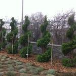 Декоративная стрижка растений любой сложности.