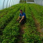 Виконання технологічних операцій вирощування плодових, ягідних і декоративних насаджень