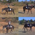Верховая езда, базовые навыки, иппотерапия