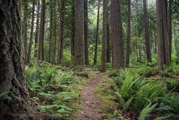 Фото Комплексне обслуговування лісу 2
