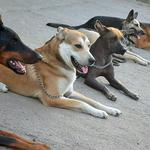 Кинология, профессиональная  дрессировка собак в Запорожье