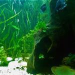Проф обслуживание аквариумов любой сложности и типа