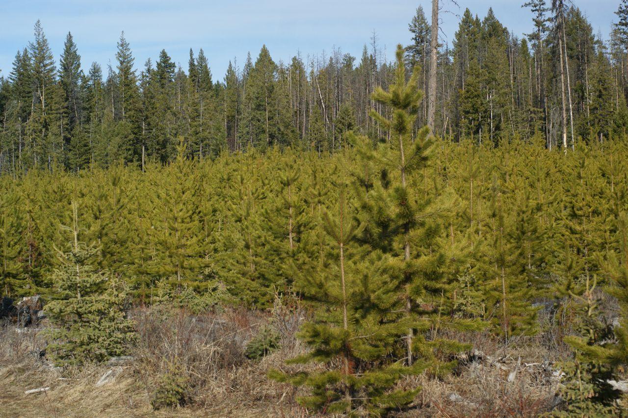 Фото Комплексне обслуговування лісу 3