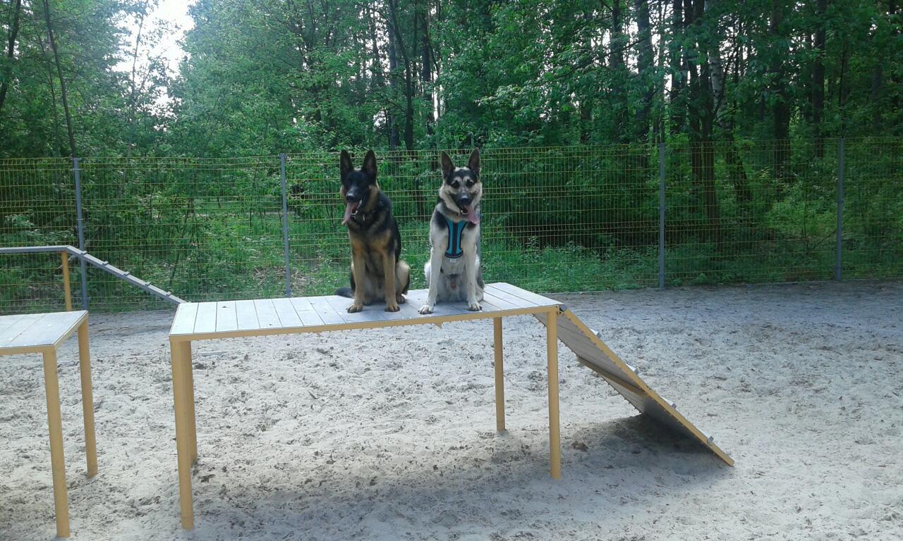 Фото Дрессировка собак. 2