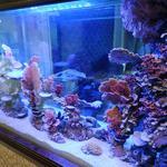 Запуск и обслуживание аквариумов