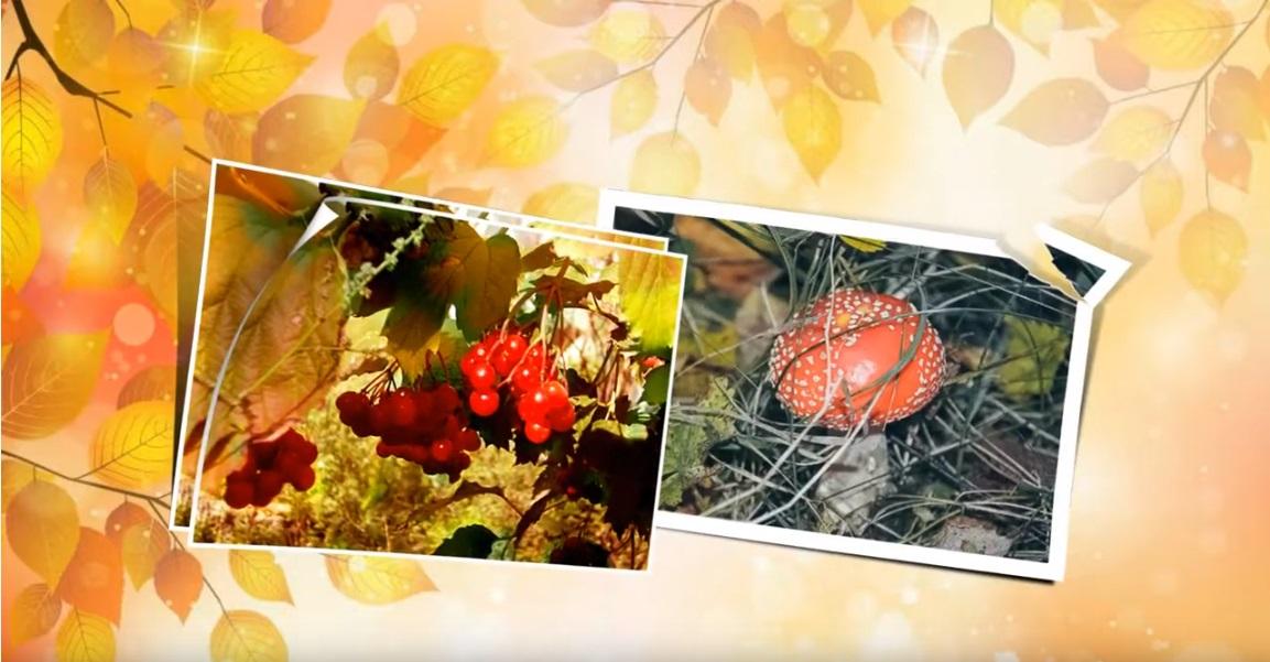 Фото мутоновых шуб больших размеров оникса