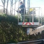Садовник, озеленител, удаление деревьев