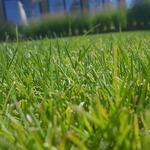 Устройство посевного и рулонного газона