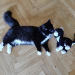 Передержка питомца. Кот, кошка, котёнок.
