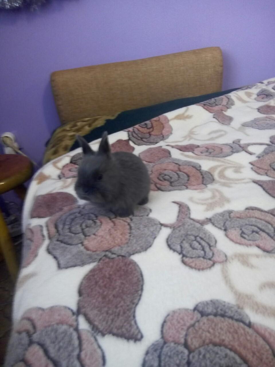 Фото Консультации по уходу за декоративными кроликами 2