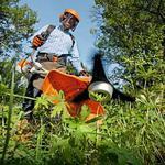 Покос травы мотокосой.