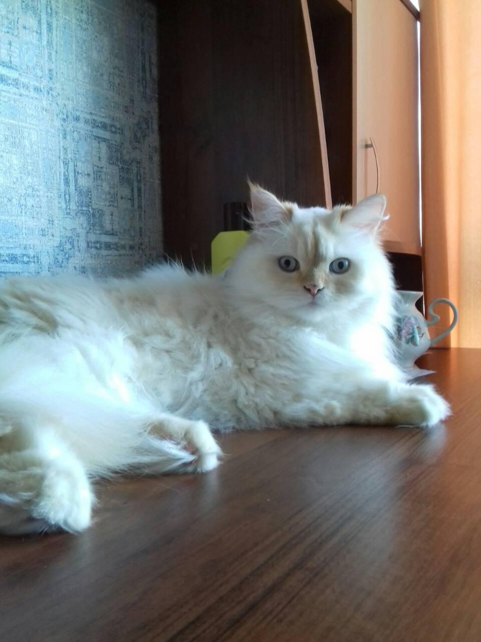 Фото Передержка двух котов котов