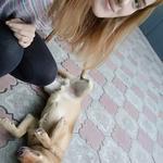 Люблю собак