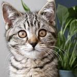Перетримка кота