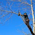 Срезание-вырубка деревьев киев