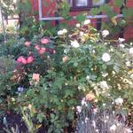 Помогу привести в порядок Ваш сад