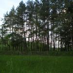 Расчистка участка, спил молодых деревьев, кустарников.