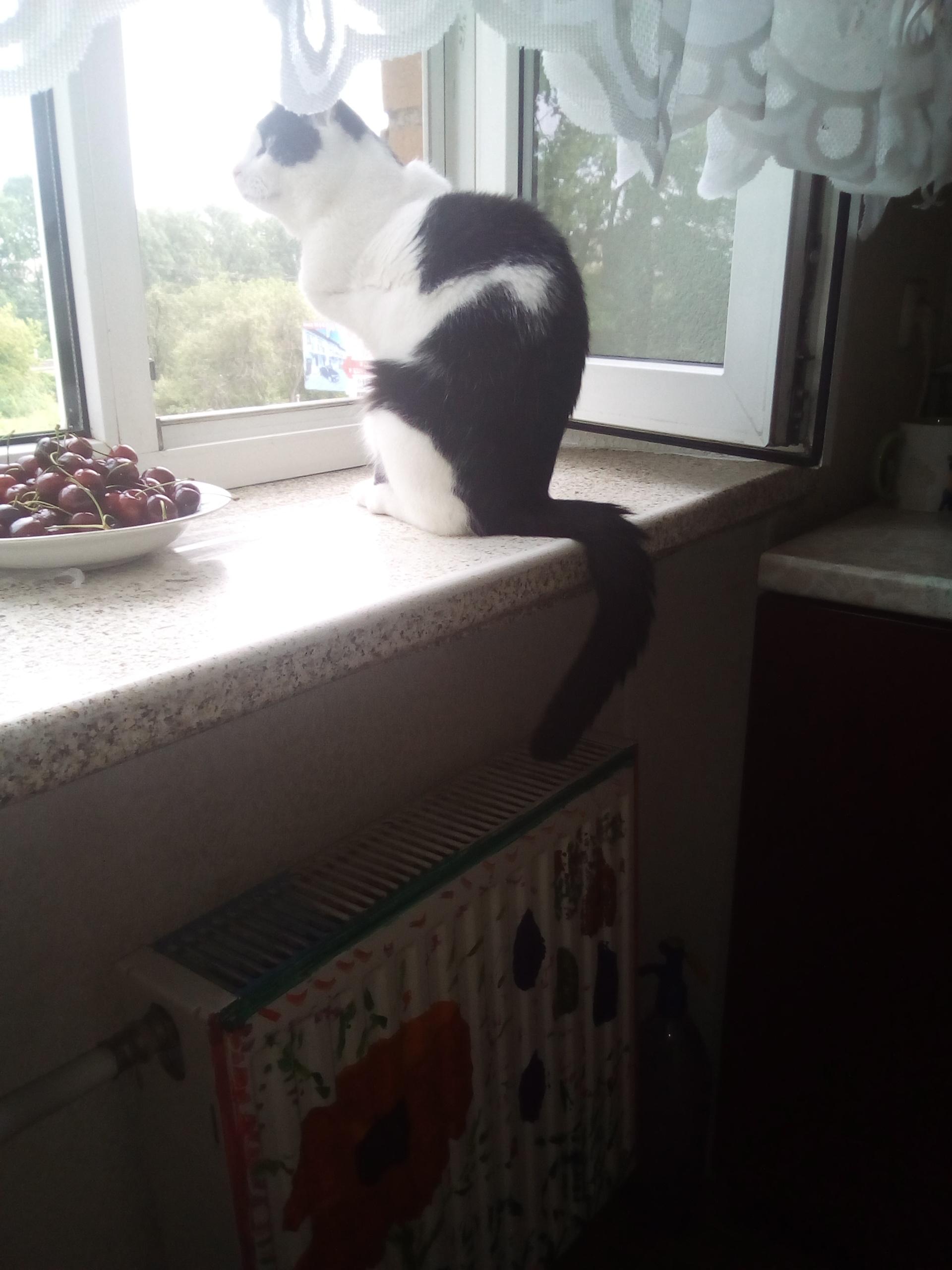 Фото Передержка котика