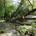 Спиливание, кронирование, фитосанитарн/аварийная подрезки, валка деревьев