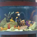 Прибирання акваріумів,чистка аквариумов