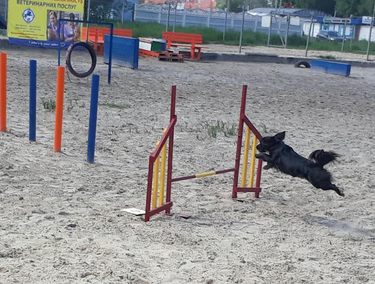 Фото Тренировки по аджилити в Дарницком р-не.