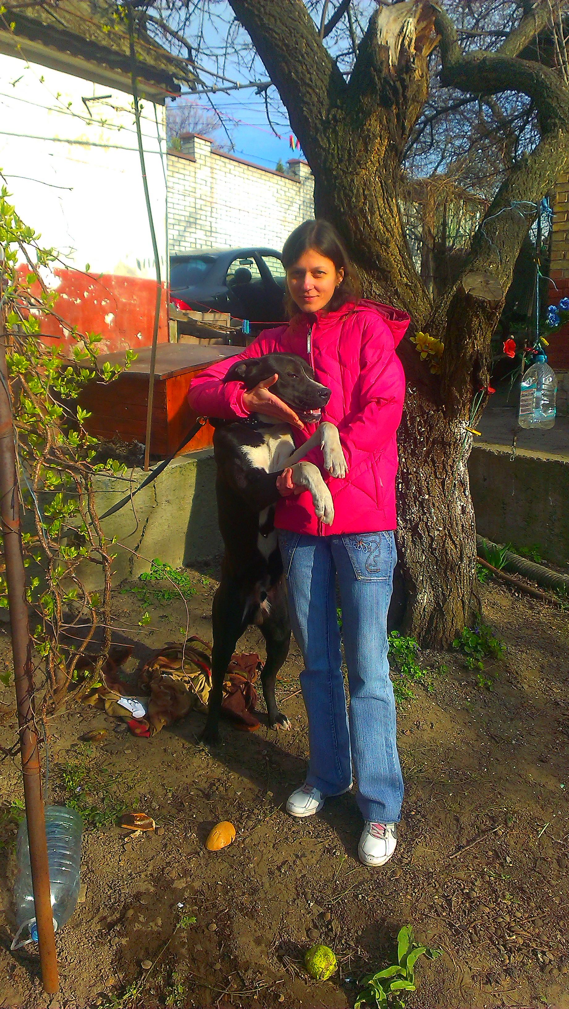Фото Передержка собак и котов на время 2