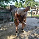 Расчистка и ковка копыт лошадей