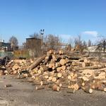 Рубка дров в Харькове