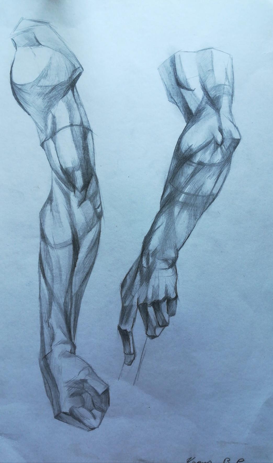 Фото Анатомия рук  А3 формат 3-4 дня