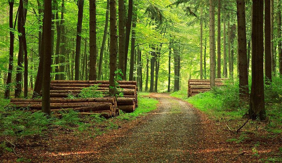 Фото Комплексне обслуговування лісу 1