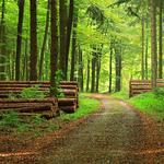Комплексне обслуговування лісу