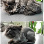 Постригу кота у Вас дома