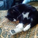 Передержка домашних котиков
