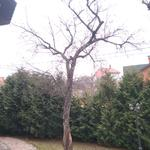 Сезонная обрезка деревьев