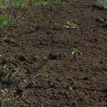Перекопка огорода вручную